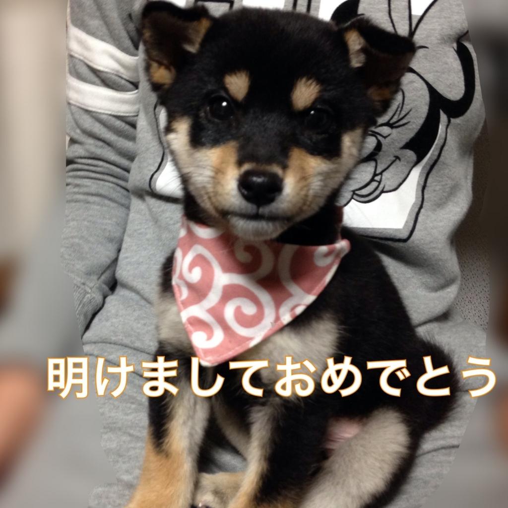 f:id:kuroshibainu:20180102213844j:plain