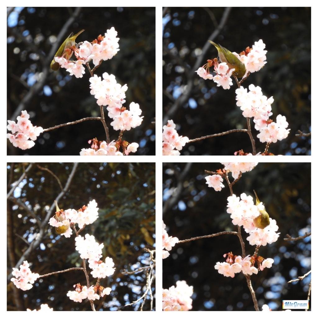 f:id:kurotsugumi:20180221085303j:plain