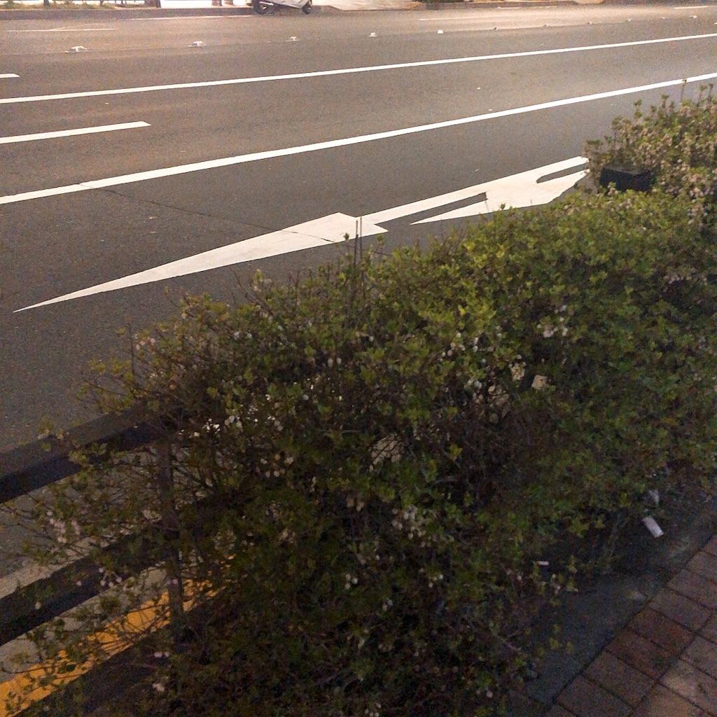f:id:kuroyagi1:20190419124346j:image