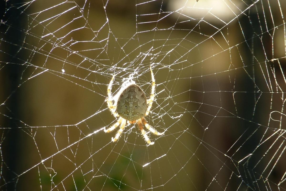 これは蜘蛛と破れた蜘蛛の巣です
