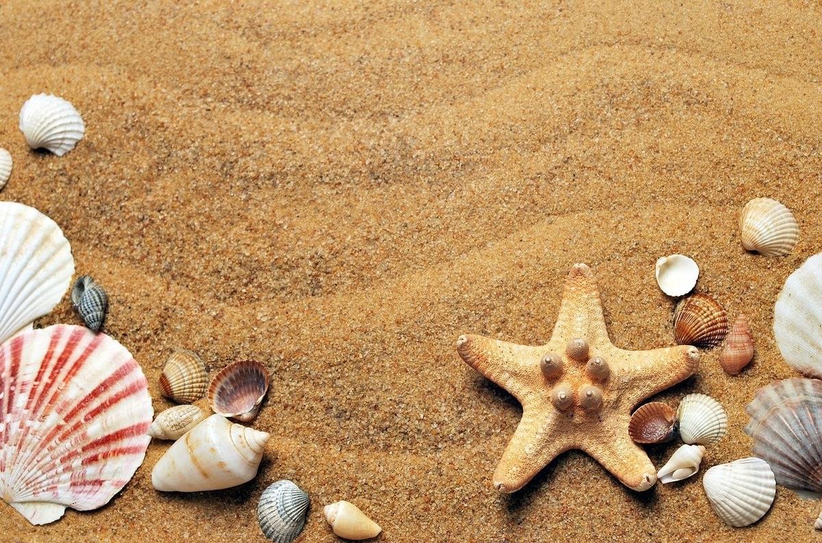これは砂浜の砂と貝殻です