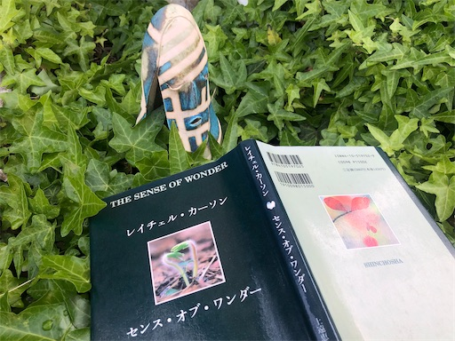 f:id:kuroyurihaze:20210419165752j:image