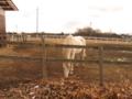 a horseback riding culb - tsuyama -
