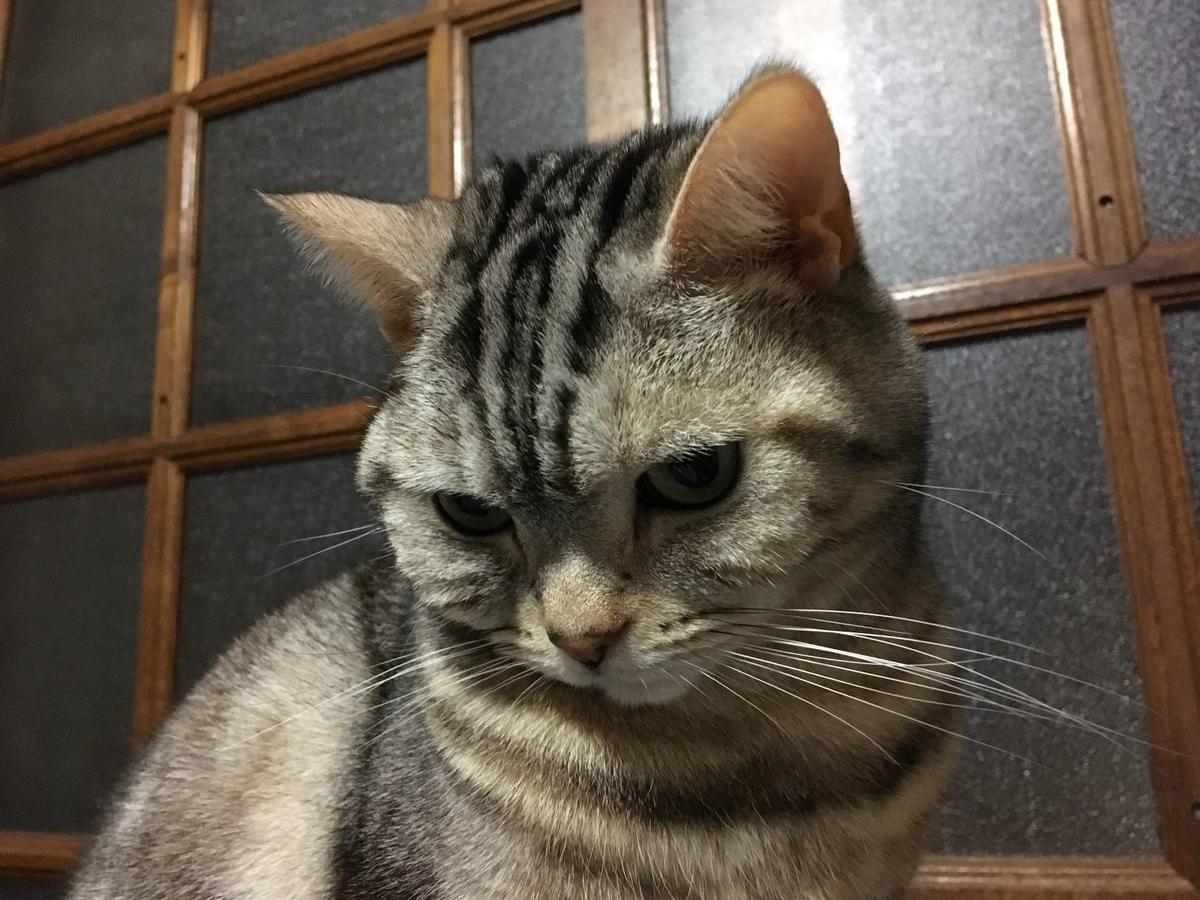 f:id:kurumi2016:20201231132359j:plain