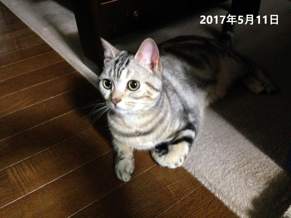 f:id:kurumi2016:20210512144658p:plain