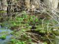 [長浜公園]枯れ枝と水草
