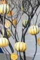 [花]ハロウィン2016-2