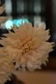 [花]マム「ピンクレイジ」2