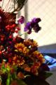 [花]マム「イエローピアレッツ」