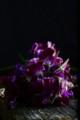[花]スイートピー「紫式部」