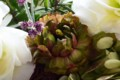 [花]ラナンキュラス「セロン」