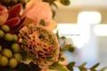 [花]ラナンキュラス「ミグノン」