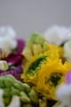 [花]ラナンキュラス