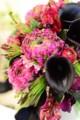 [花]ラナンキュラス「マルヴァ」