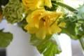 [花]ラナンキュラス「ラックス」