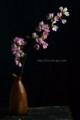[花]桜「雅」1