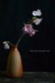 [花]桜「陽光」1