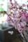 桜「陽光」3
