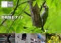 [野鳥]野鳥撮影ナイト