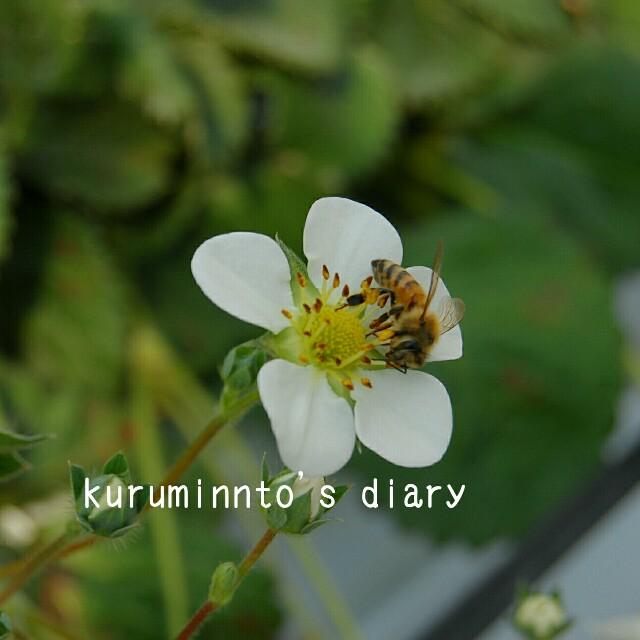 f:id:kuruminnto:20180212154744j:image