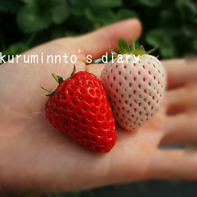 f:id:kuruminnto:20180212154833j:image
