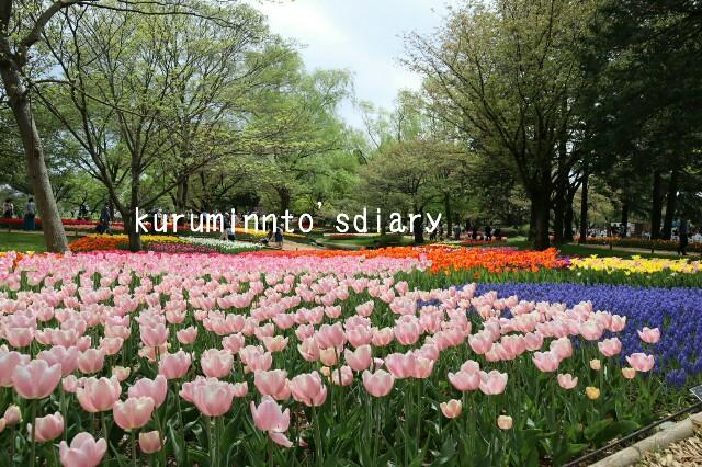 f:id:kuruminnto:20180410173240j:image