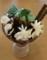 チョコミントパフェ かっぱ寿司