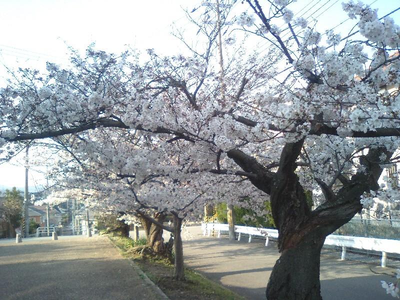 f:id:kuruppo:20090405205441j:image:w400