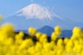 [富士山][風景]