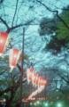 [東京][上野][花見]