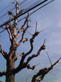 f:id:kusaboshi:20061121204619j:image