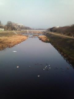 f:id:kusaboshi:20070129100254j:image