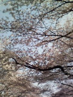 f:id:kusaboshi:20070330143138j:image