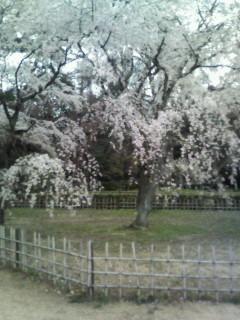 f:id:kusaboshi:20070331105205j:image
