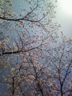 f:id:kusaboshi:20070403183722j:image