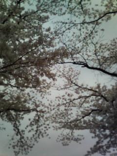 f:id:kusaboshi:20070407184932j:image