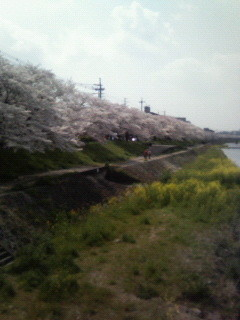 f:id:kusaboshi:20070409121533j:image