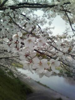 f:id:kusaboshi:20070409121906j:image