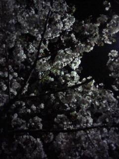 f:id:kusaboshi:20070412230452j:image