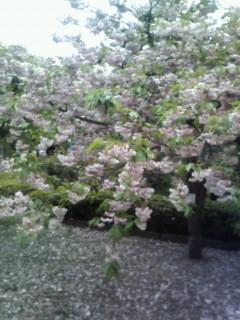 f:id:kusaboshi:20070428105334j:image