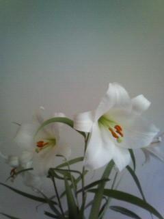 f:id:kusaboshi:20070604111714j:image