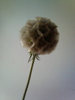 f:id:kusaboshi:20070605134721j:image