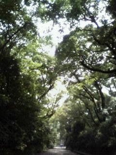 f:id:kusaboshi:20070726134331j:image