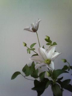 f:id:kusaboshi:20070827100739j:image