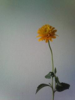 f:id:kusaboshi:20070907113352j:image