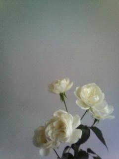f:id:kusaboshi:20071106223310j:image