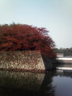 f:id:kusaboshi:20071115215458j:image