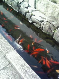 f:id:kusaboshi:20071115215619j:image
