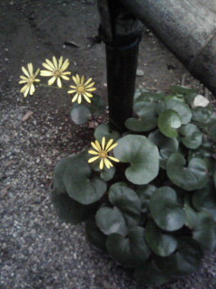 f:id:kusaboshi:20071115220930j:image