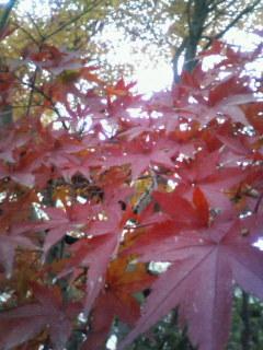 f:id:kusaboshi:20071129232712j:image